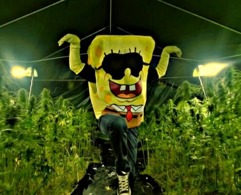SpongeBOZZ im Weed